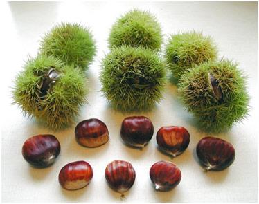 Плоды и орехи каштана